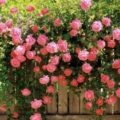 Опора для плетистой розы: готовые решения для вашей дачи