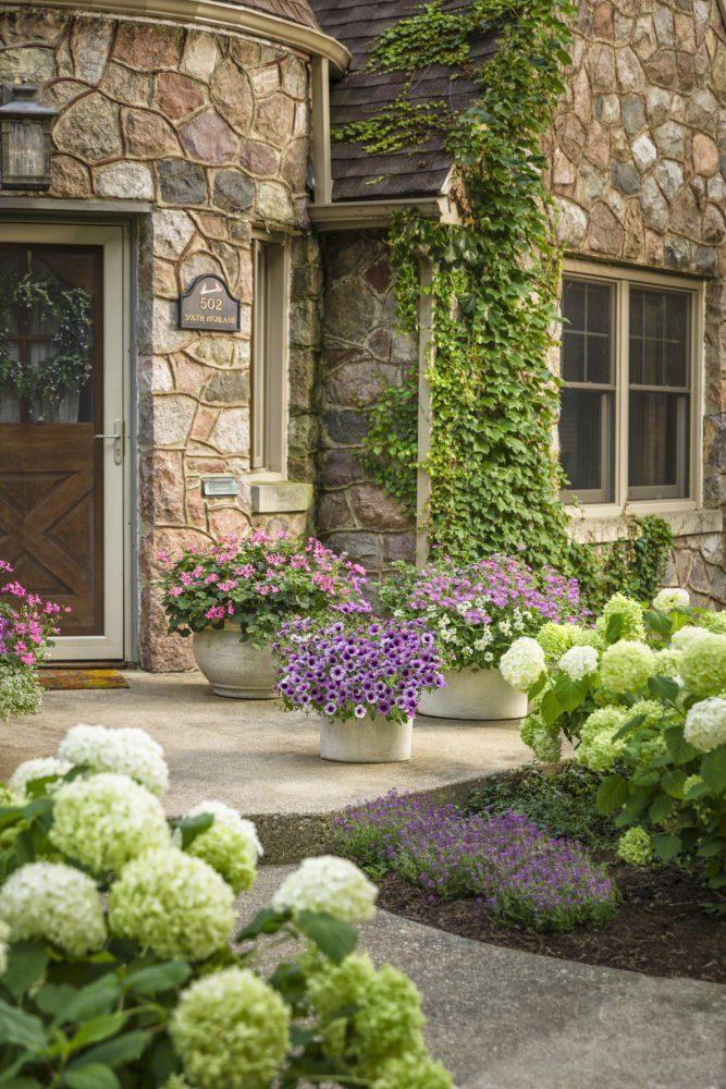 Цветы алиссум : всё, что нужно знать о посадке, выращивании и уходе 50+ фото