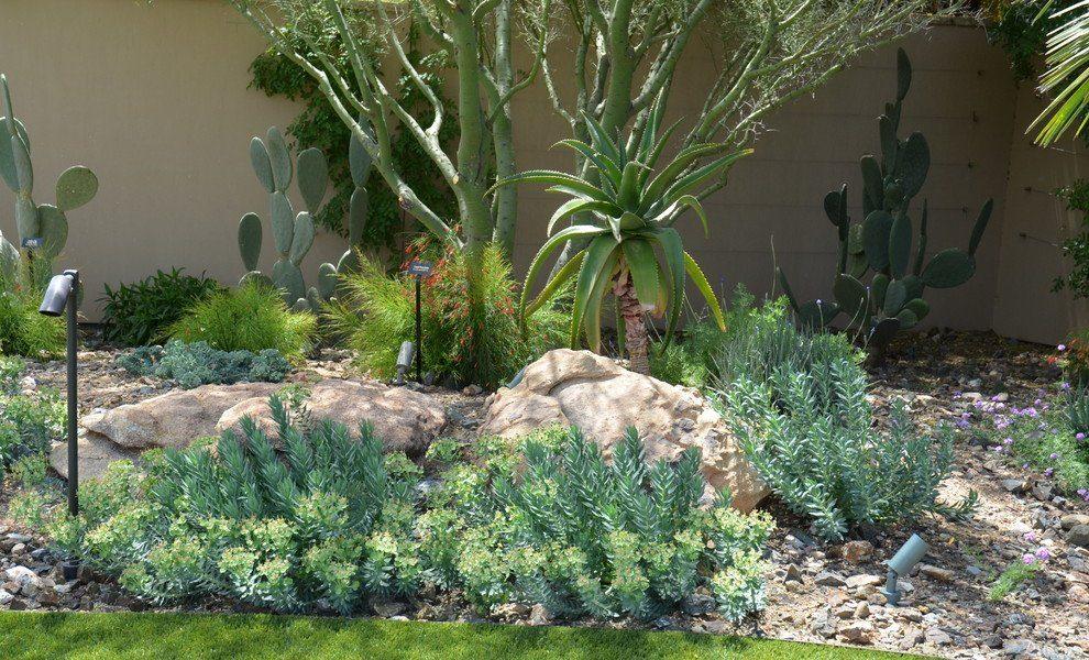Комнатный и садовый молочай (60+ фото видов с названиями): посадка и уход за растением