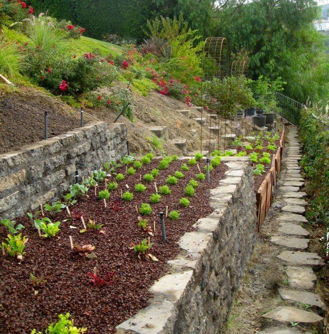 70+ идей грядок на даче: красивые, «умные», «ленивые» – всё, что нужно знать огороднику!