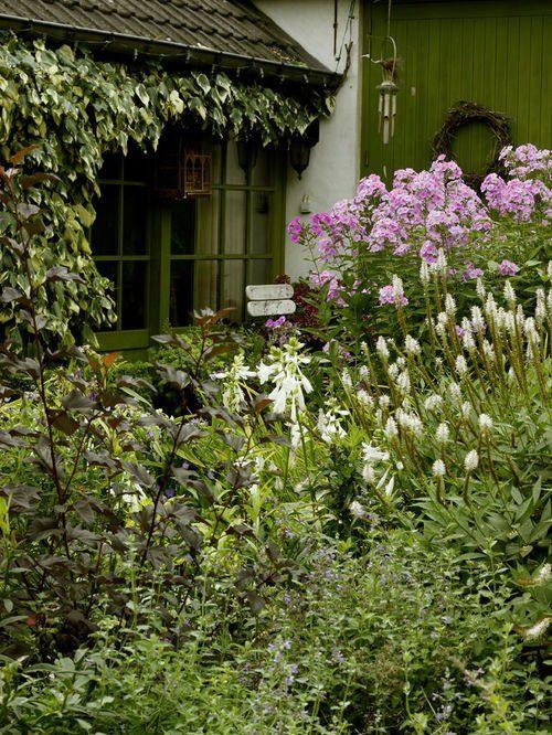 Шиловидный флокс (60+ фото в ландшафтном дизайне): описание сортов, посадка, уход, выращивание и размножение