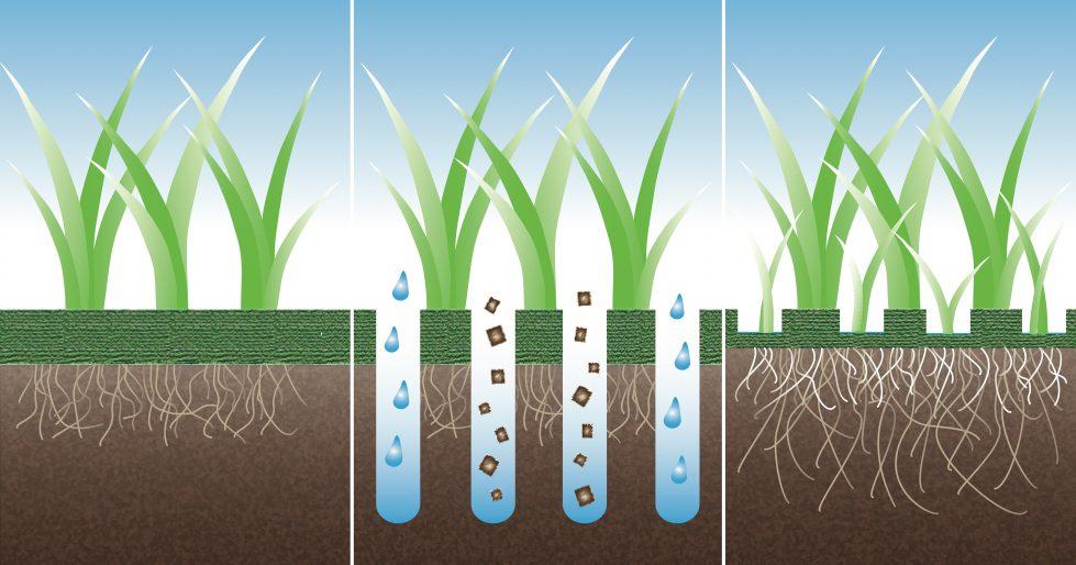 Идеальный газон своими руками (70 фото): как и когда лучше всего сеять газонную траву?