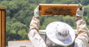 Россельхознадзор рассказал о правилах содержания пчел